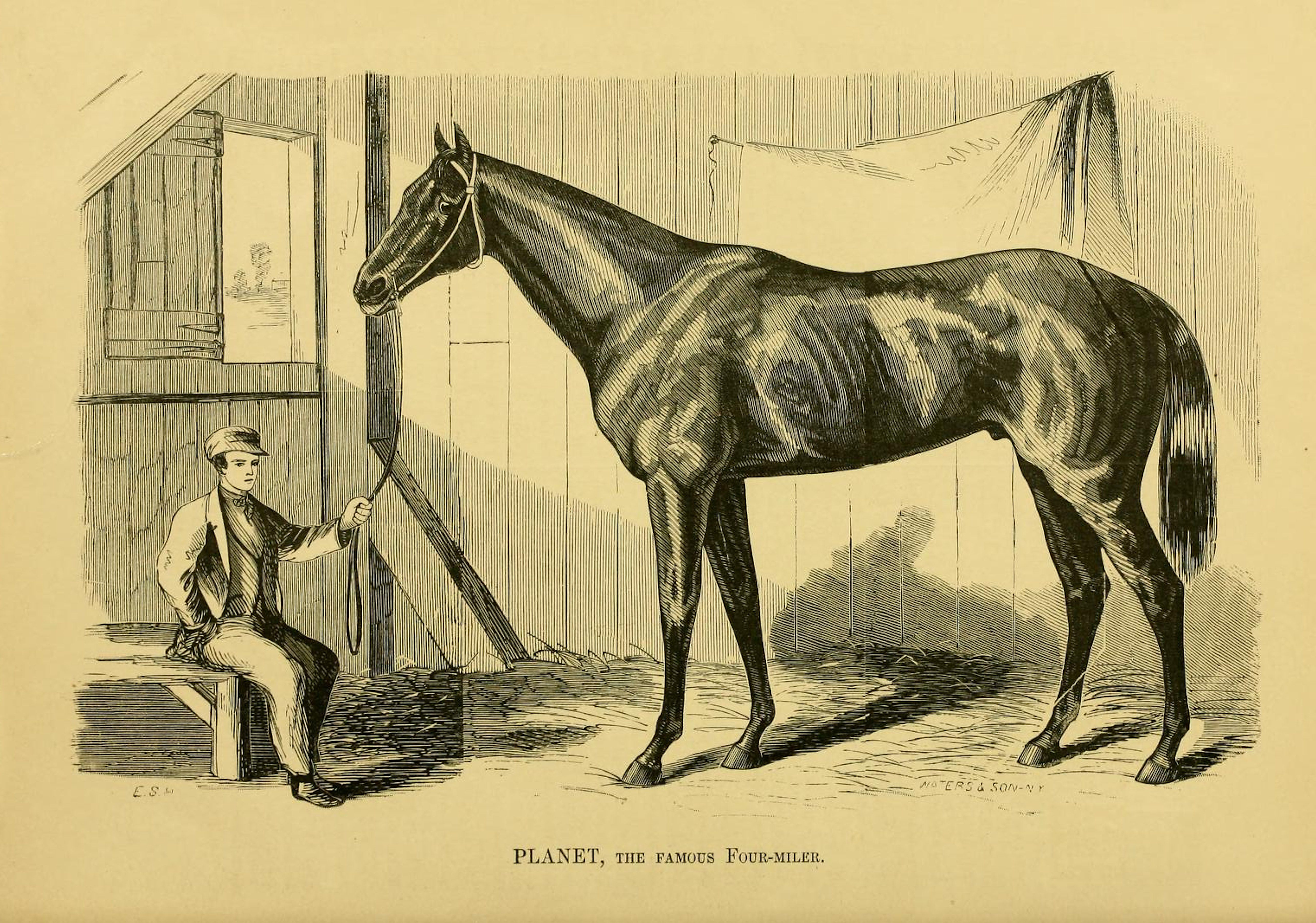 "Illustration of Planet from ""Famous American Racehorses,"" 1877 (Museum Collection)"