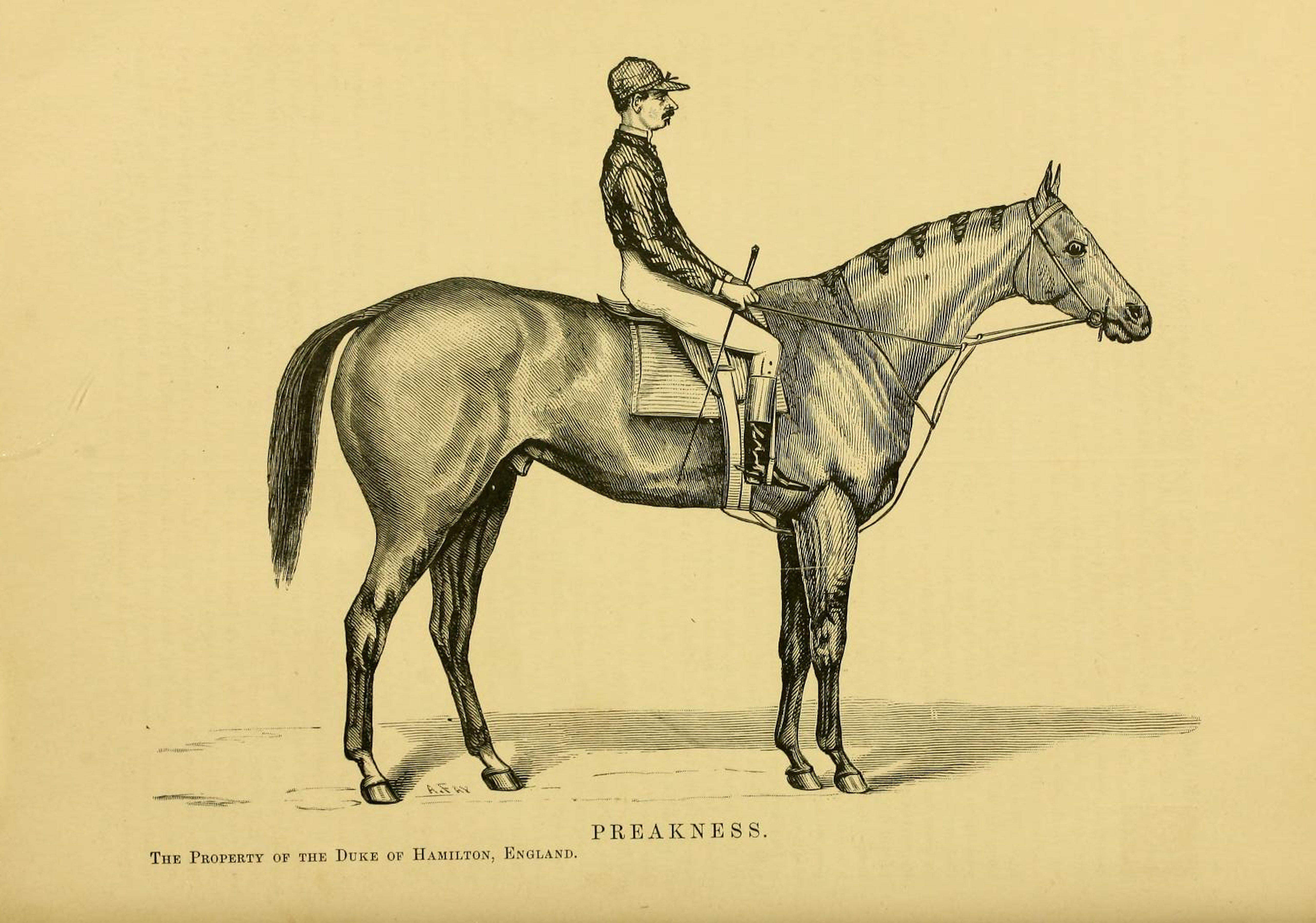 """A likeness of Preakness with an unidentified rider from """"Famous American Horses"""""""