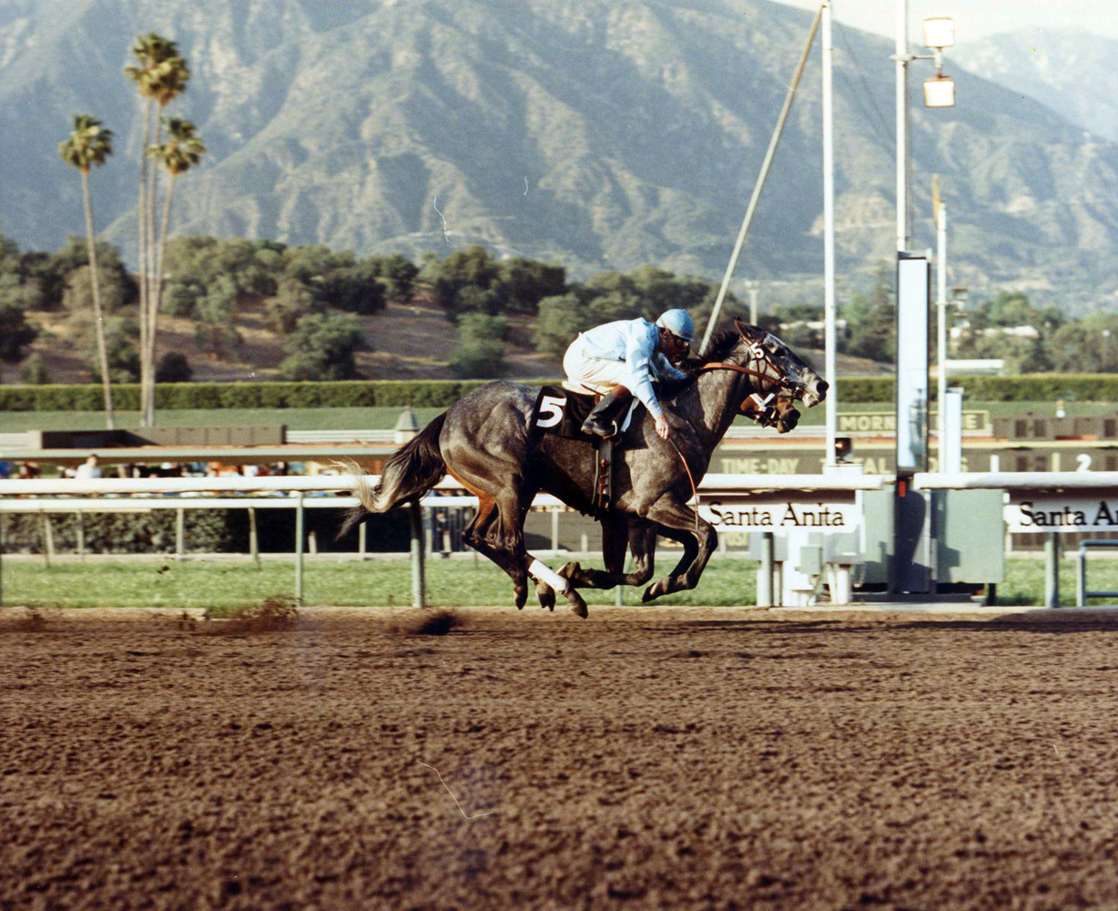Princess Rooney (Eddie Delahoussaye up) winning the Susan's Girl at Santa Anita by a nose, March 1984 (Santa Anita Photo/Museum Collection)