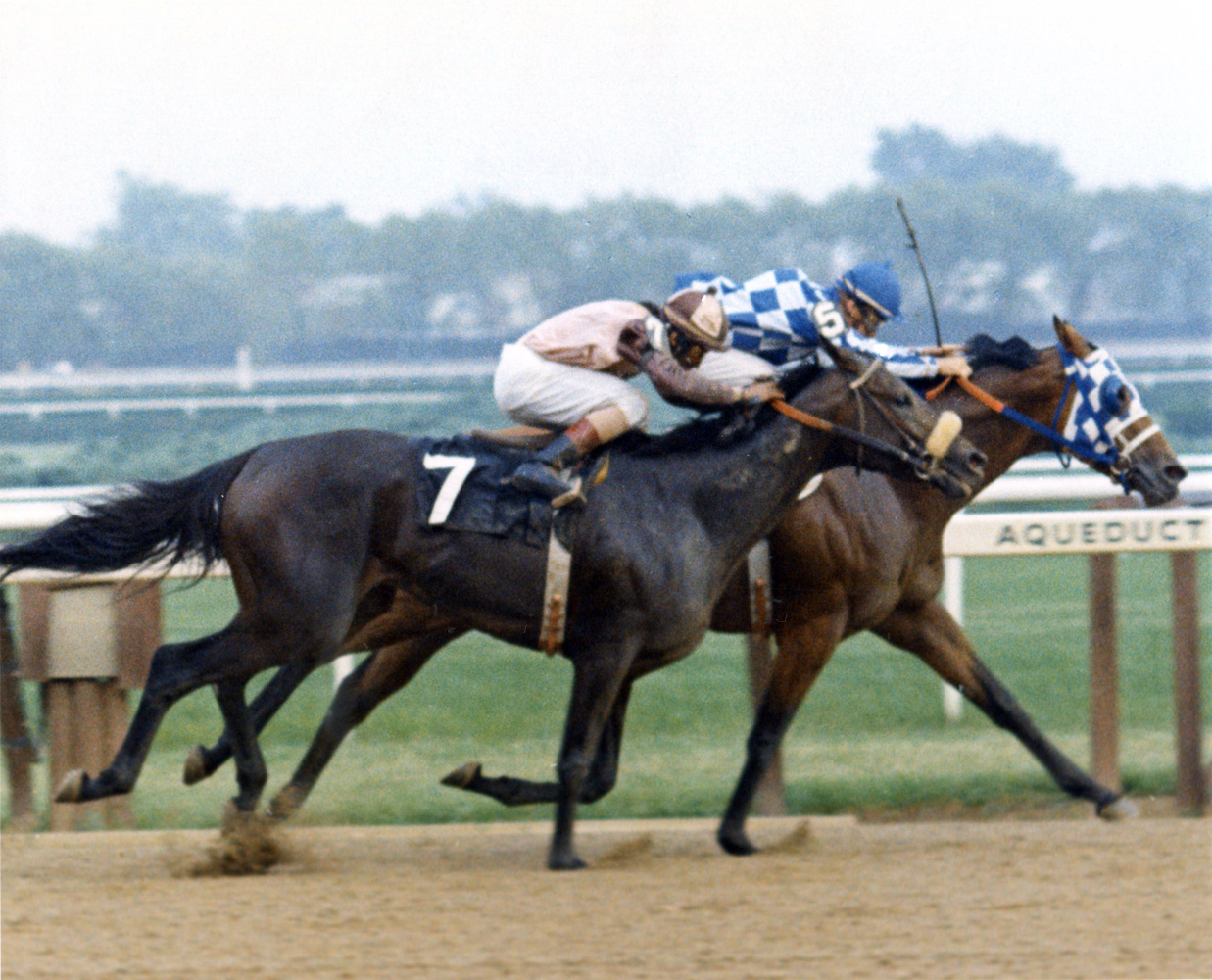 Riva Ridge (Ron Turcotte up) winning the 1973 Brooklyn Handicap at Aqueduct by a head (Bob Coglianese/Museum Collection)