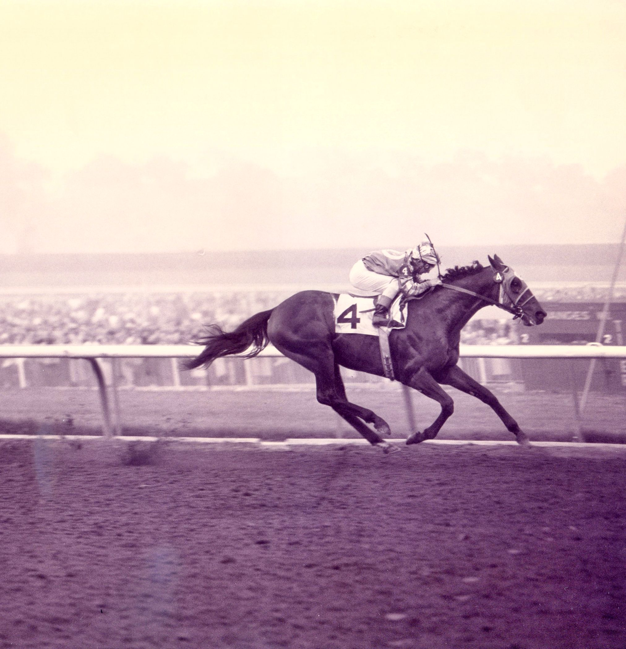Round Table (Bill Shoemaker up) winning the 1958 San Antonio Handicap at Santa Anita Park (Santa Anita Photo/Museum Collection)