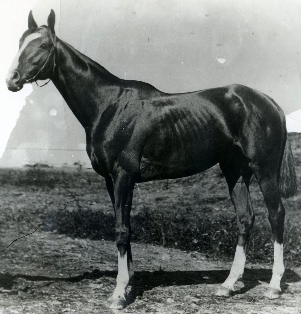 Salvator (Keeneland Library Cook Collection/Museum Collection)
