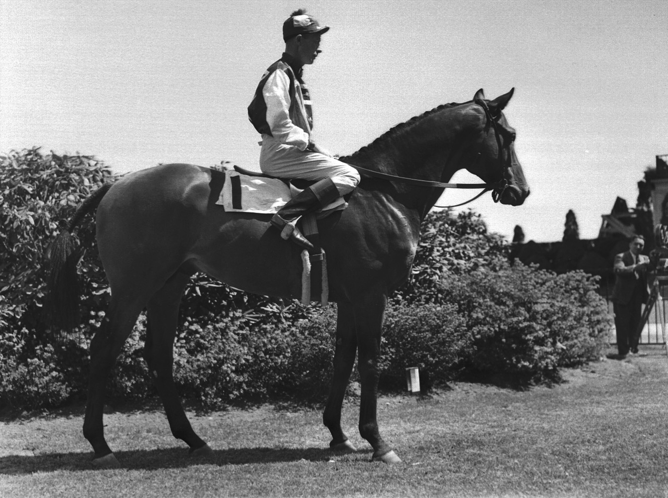 Seabiscuit with Red Pollard (Museum Collection)