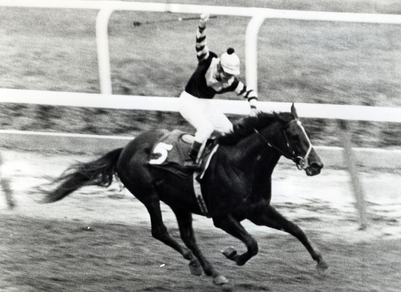 Seattle Slew (Jean Cruguet up) winning the 1977 Belmont Stakes and becoming America's 10th Triple Crown winner (NYRA/Museum Collection)