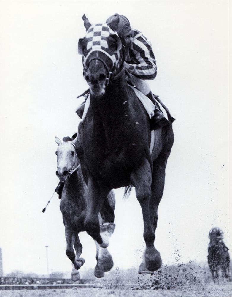 Secretariat (Ron Turcotte up) winning the 1973 Gotham at Aqueduct (Bob Coglianese/Museum Collection)