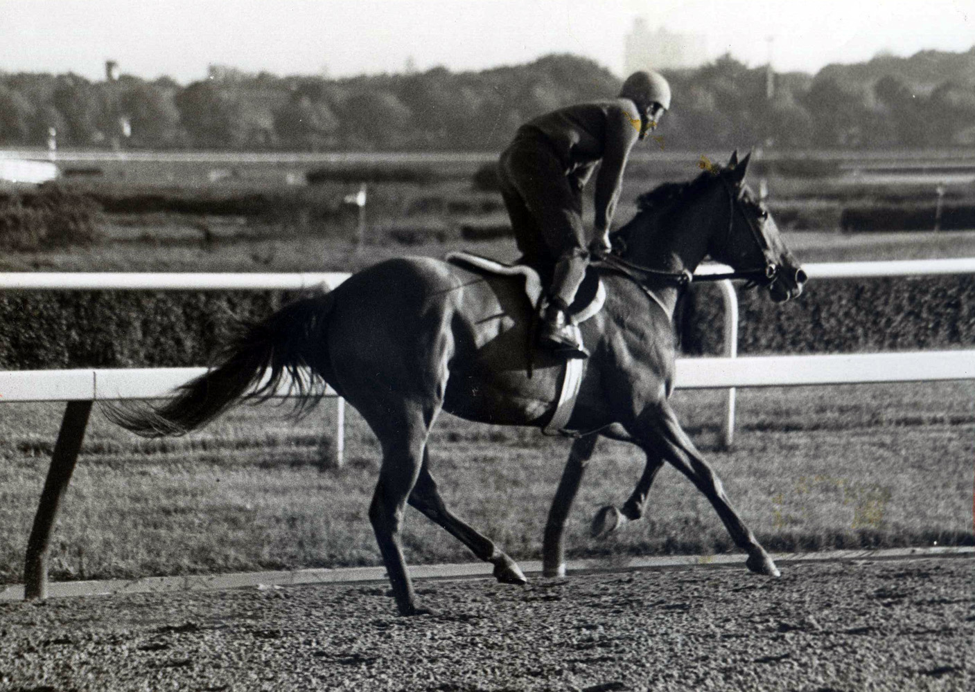 Shuvee during morning workouts at Aqueduct, May 1969 (NYRA/Paul Schafer /Museum Collection)
