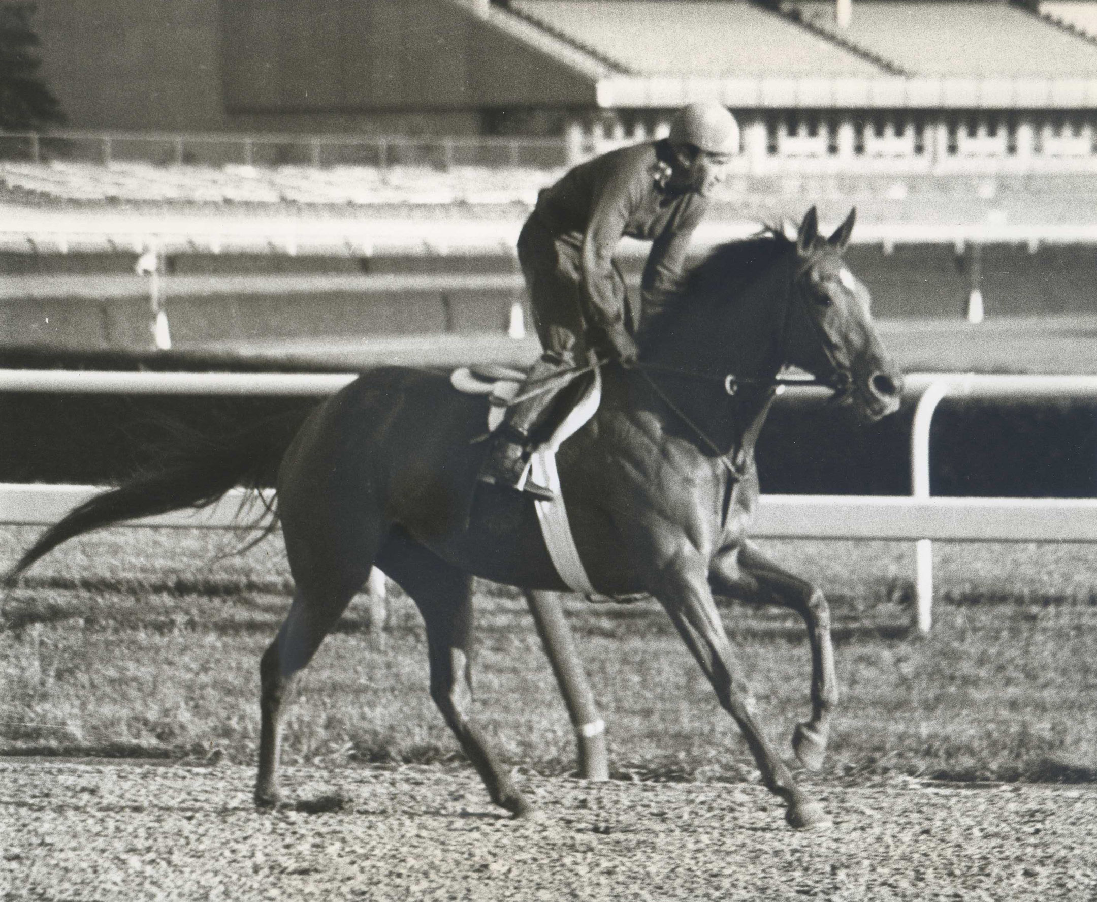 Shuvee during morning workouts at Belmont Park in 1970 (NYRA/Paul Schafer /Museum Collection)