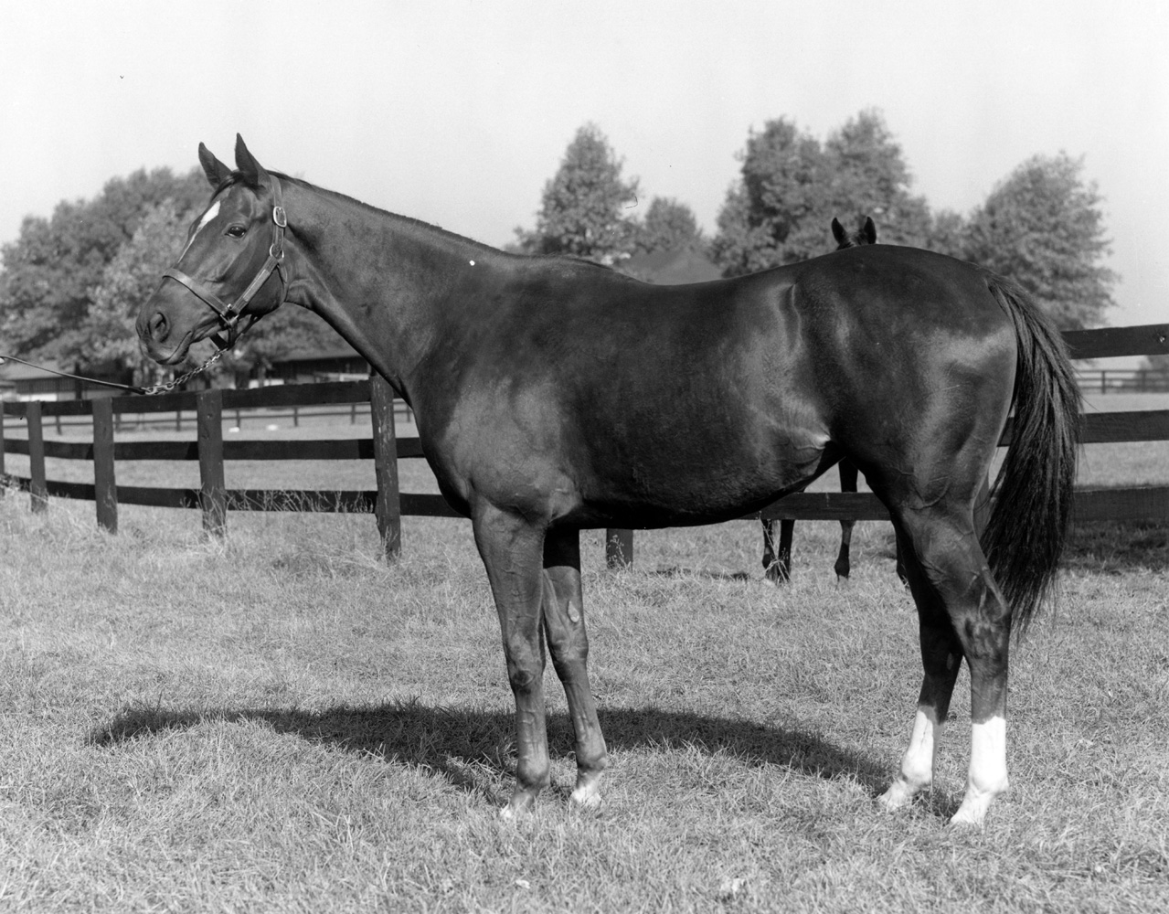 Silver Spoon at Keeneland, October 1959 (Keeneland Library Meadors Collection/Museum Collection)