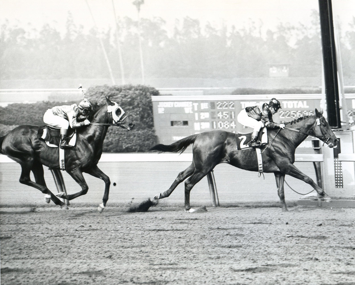 Swaps (Bill Shoemaker up) winning the 1956 Argonaut Handicap at Hollywood Park (Museum Collection)