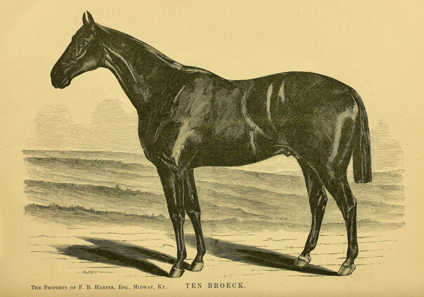 """Illustration of Ten Broeck from """"Famous American Racehorses,"""" 1877 (Museum Collection)"""