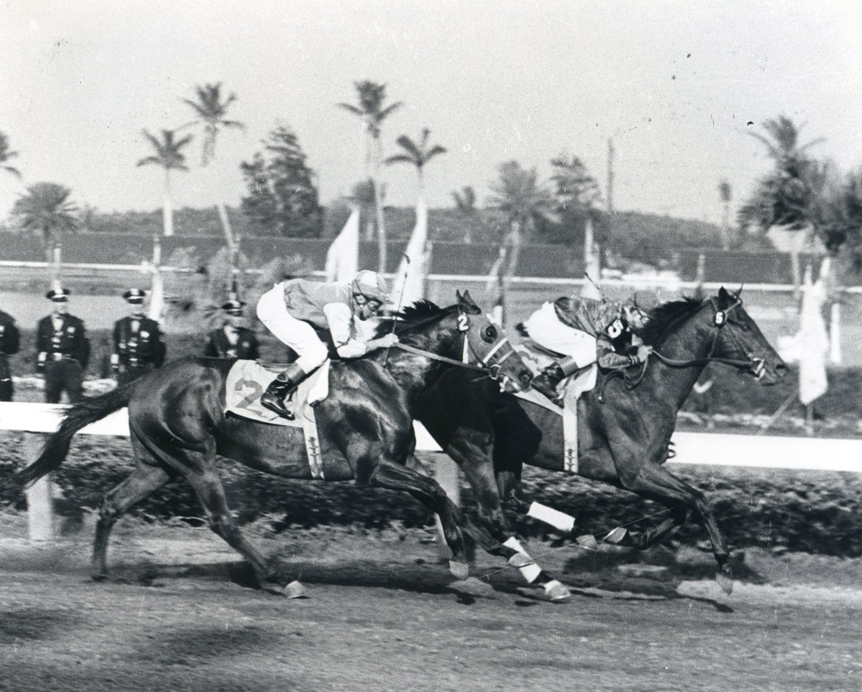 Tim Tam (Bill Hartack up) winning the 1958 Florida Derby at Gulfstream Park (Jim Raftery Turfotos/Museum Collection)