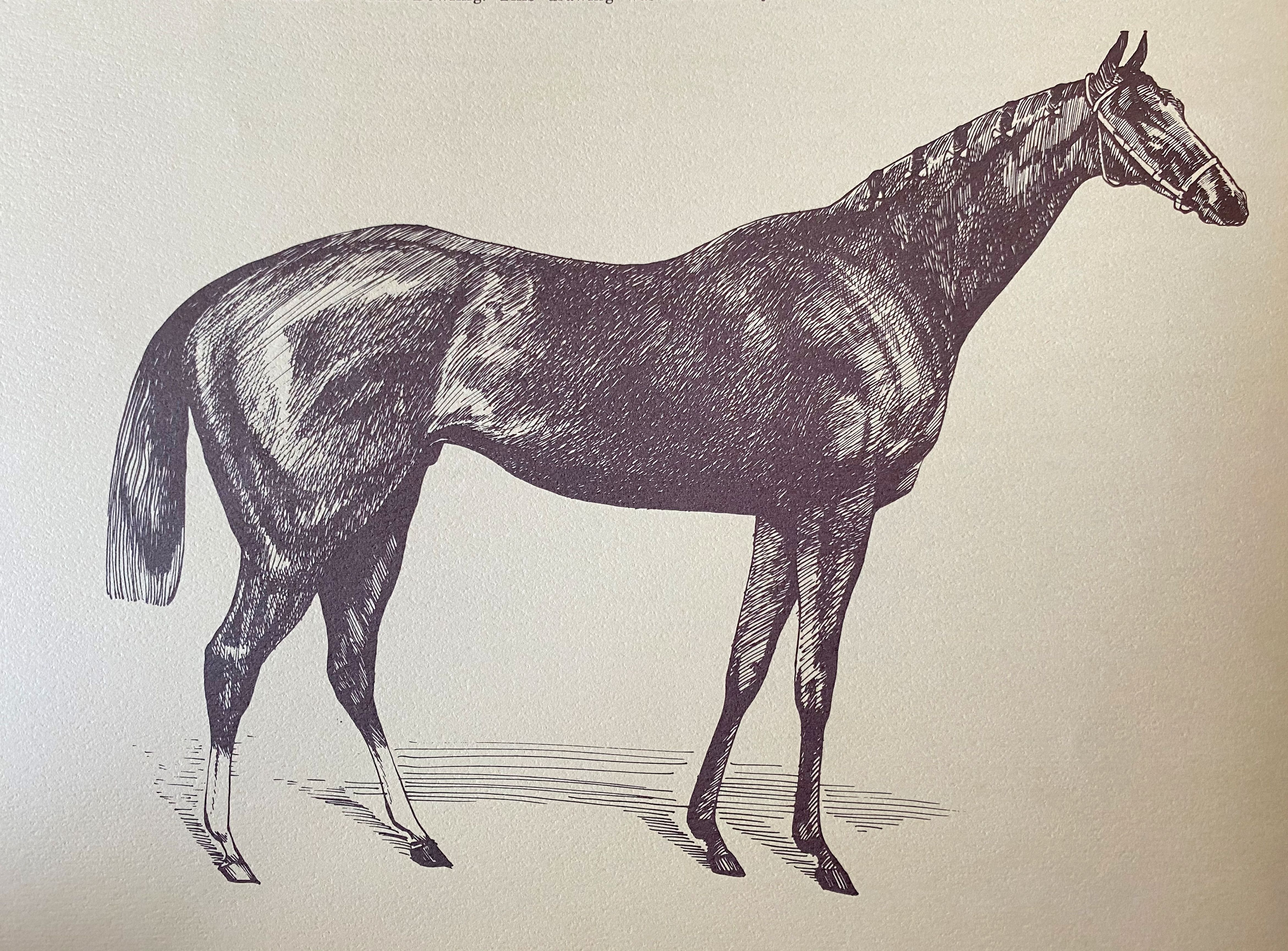 """Illustration of Tom Bowling from """"The Great Ones"""" (The BloodHorse)"""