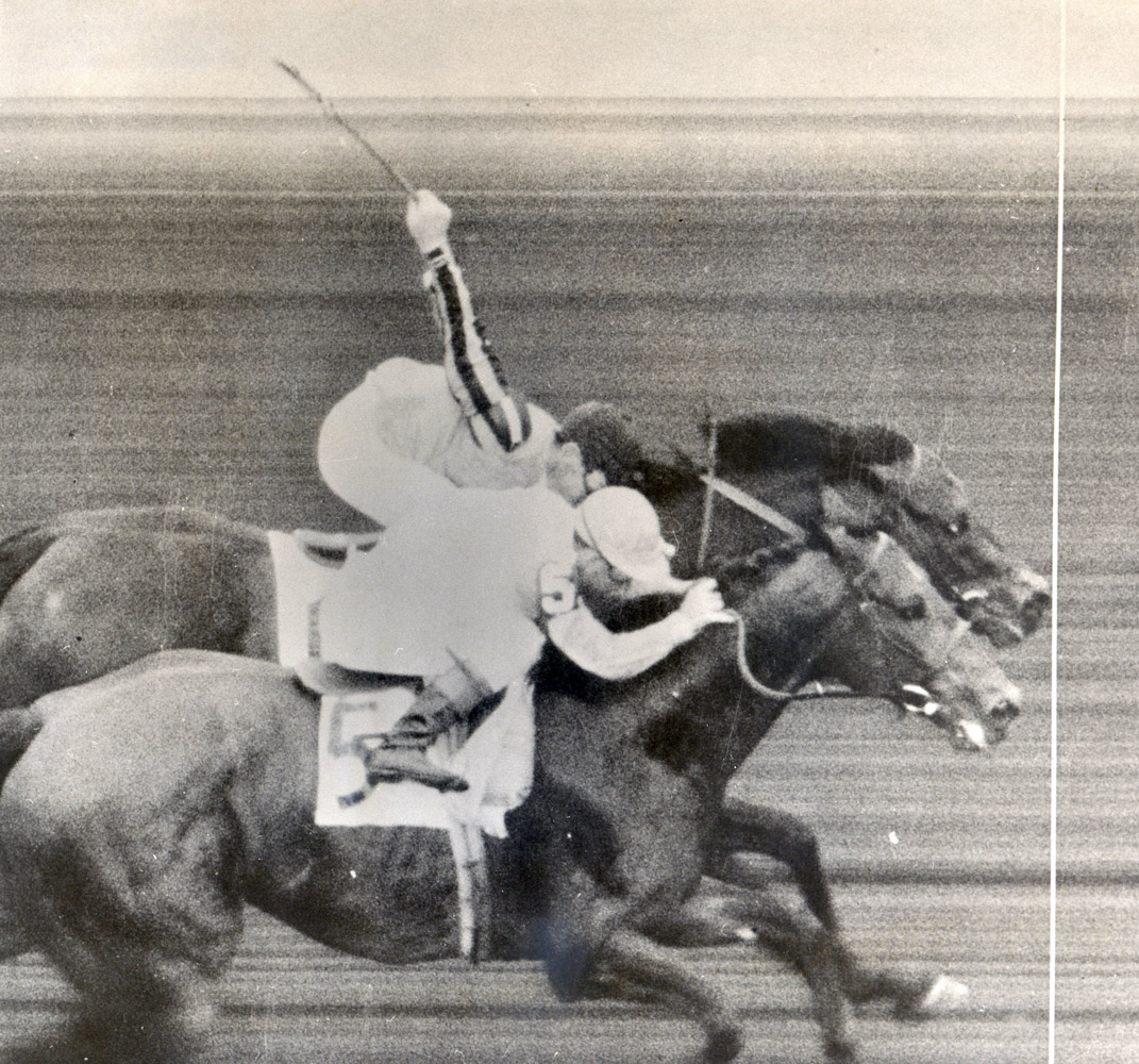 Tom Fool (Ted Atkinson up) winning the 1953 Suburban Handicap at Belmont by a nose (Museum Collection)