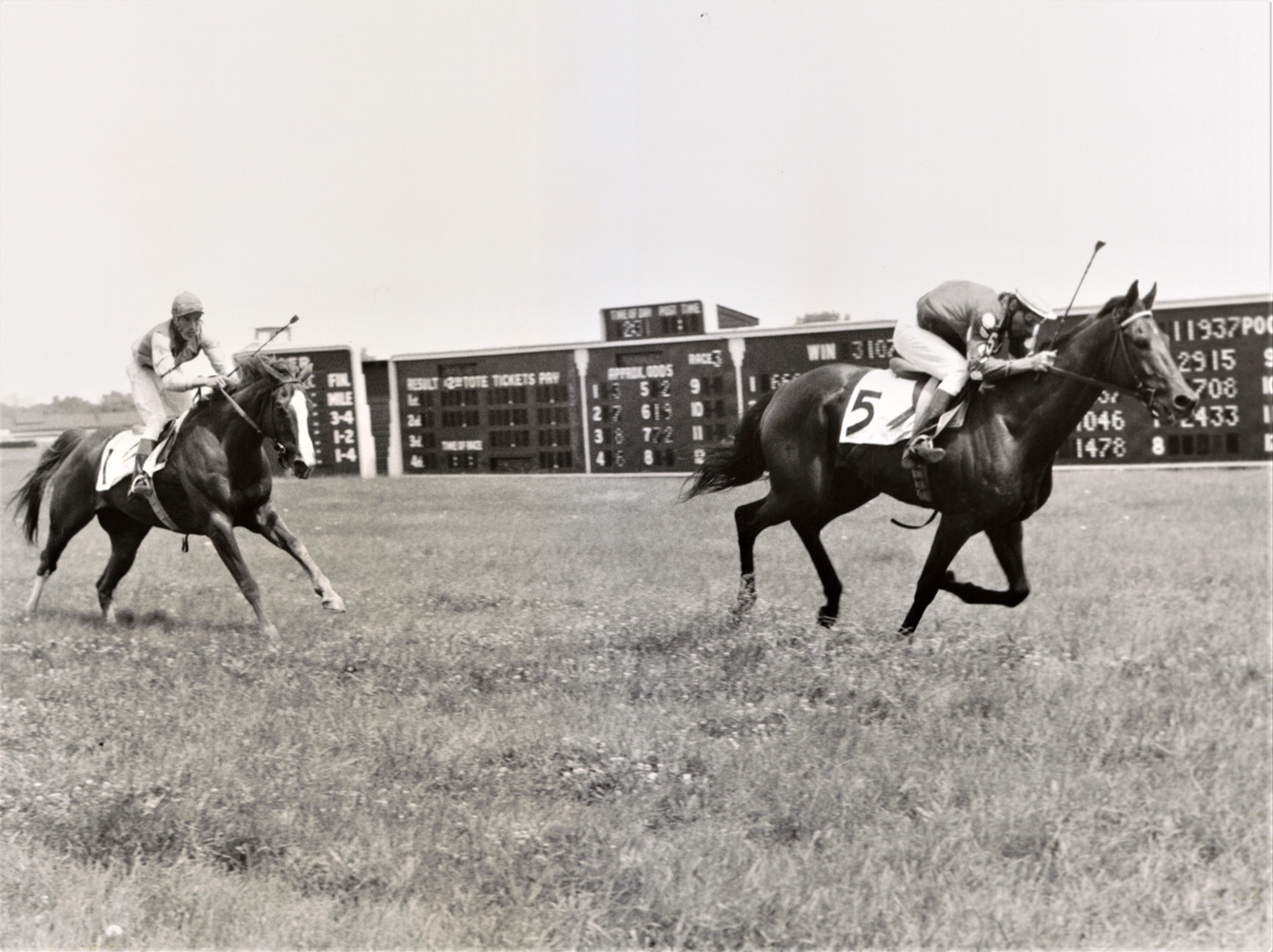 Tuscalee (Joe Aitcheson up) racing to the finish in the 1967 Georgetown Steeplechase Handicap at Delaware Park (Keeneland Library Thoroughbred Times Collection)