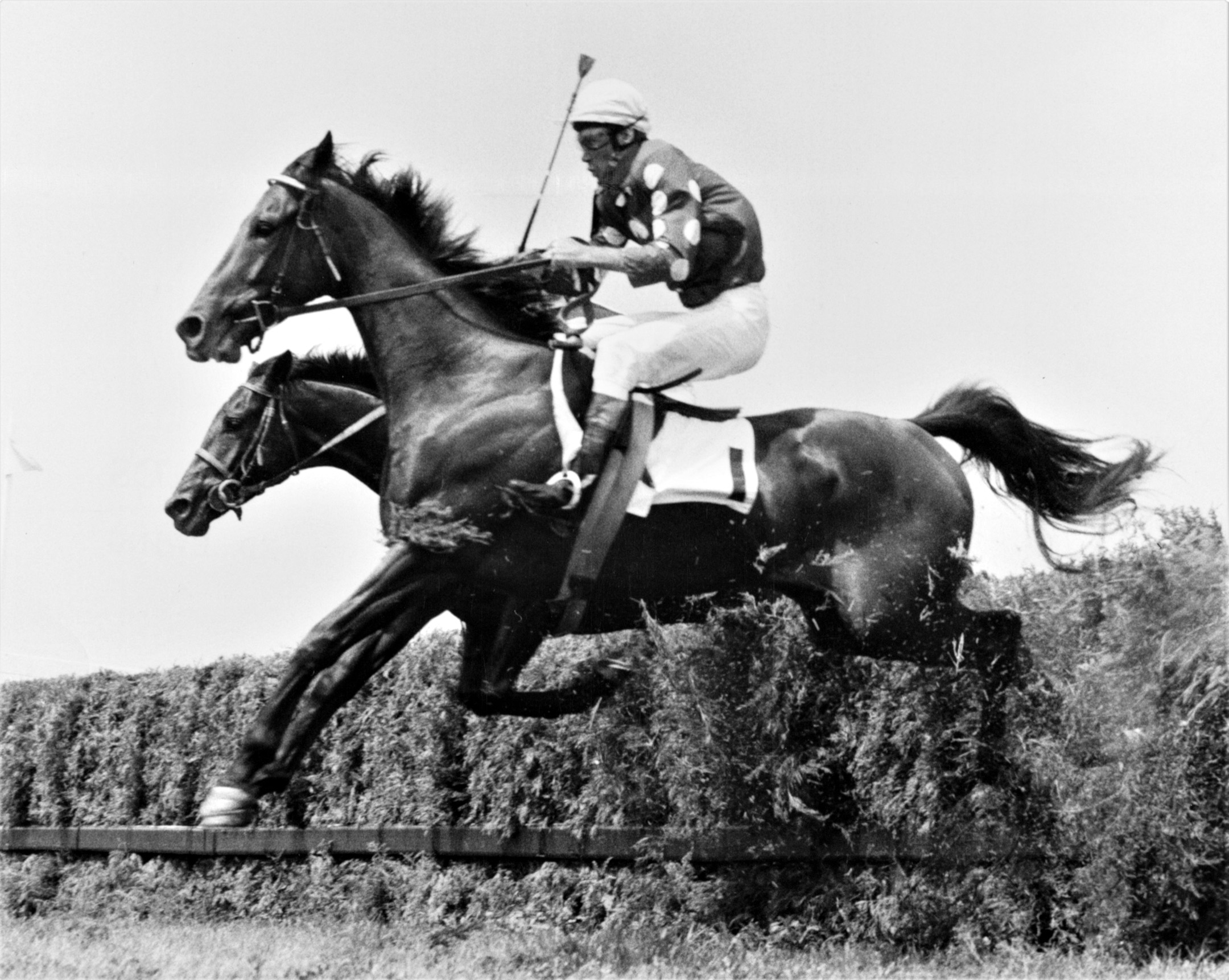 Tuscalee clearing a jump in his 1966 Georgetown Steeplechase Handicap win at Delaware Park (Keeneland Library Thoroughbred Times Collection)