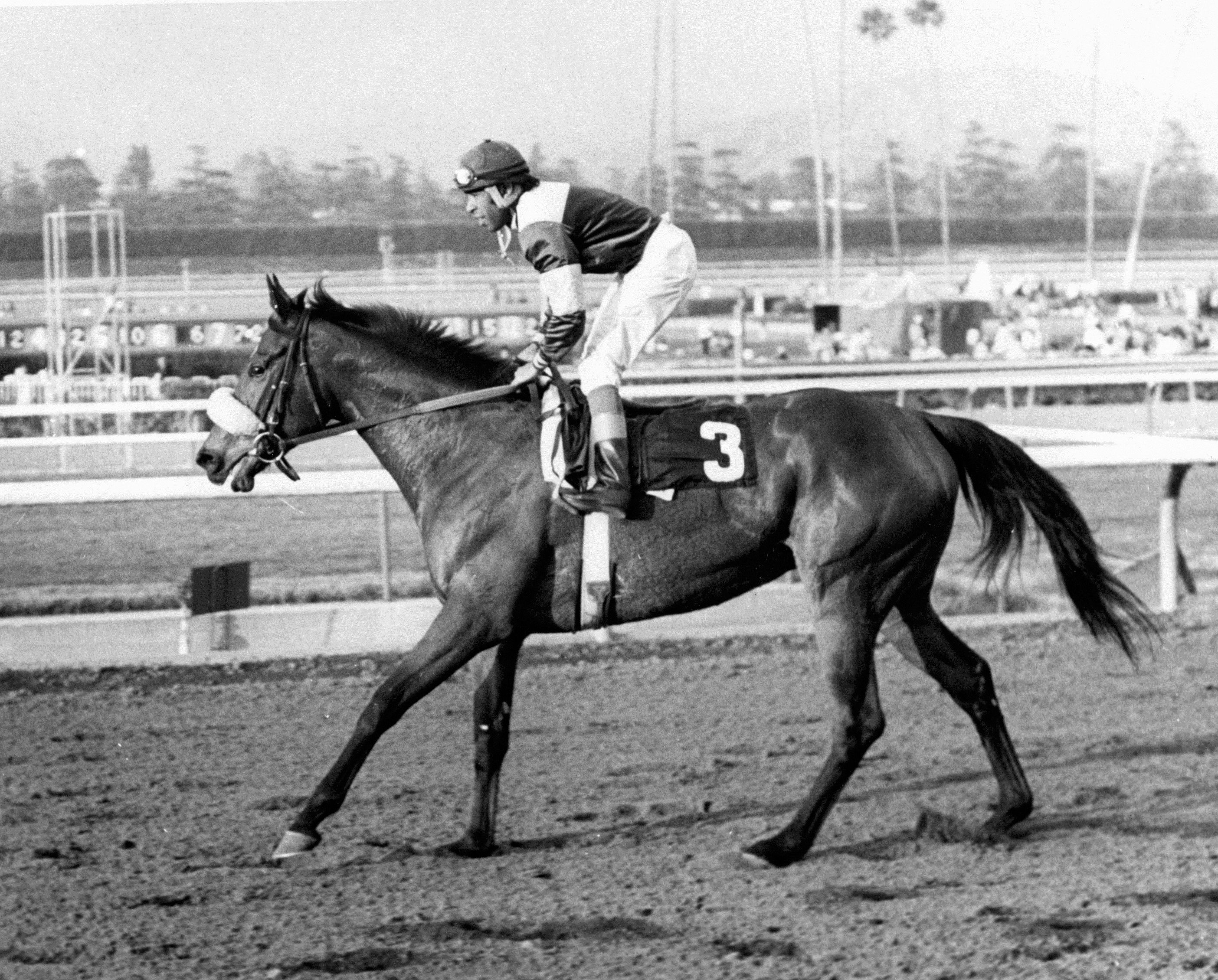 Waya (Angel Cordero up) after winning the 1979 Santa Barbara Handicap (Santa Anita Park Photo)
