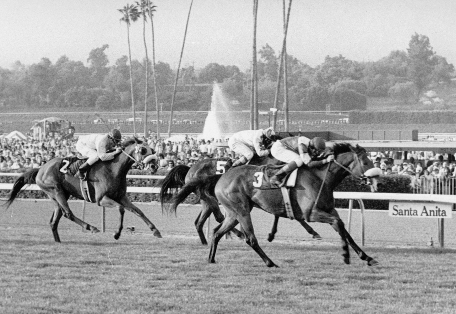 Waya (Angel Cordero up) winning the 1979 Santa Barbara Handicap at Santa Anita Park (Santa Anita Photo)
