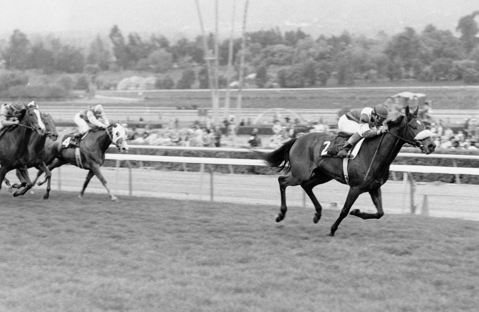 Waya (Angel Cordero up) winning the 1979 Santa Ana Handicap at Santa Anita Park (Santa Anita Photo)