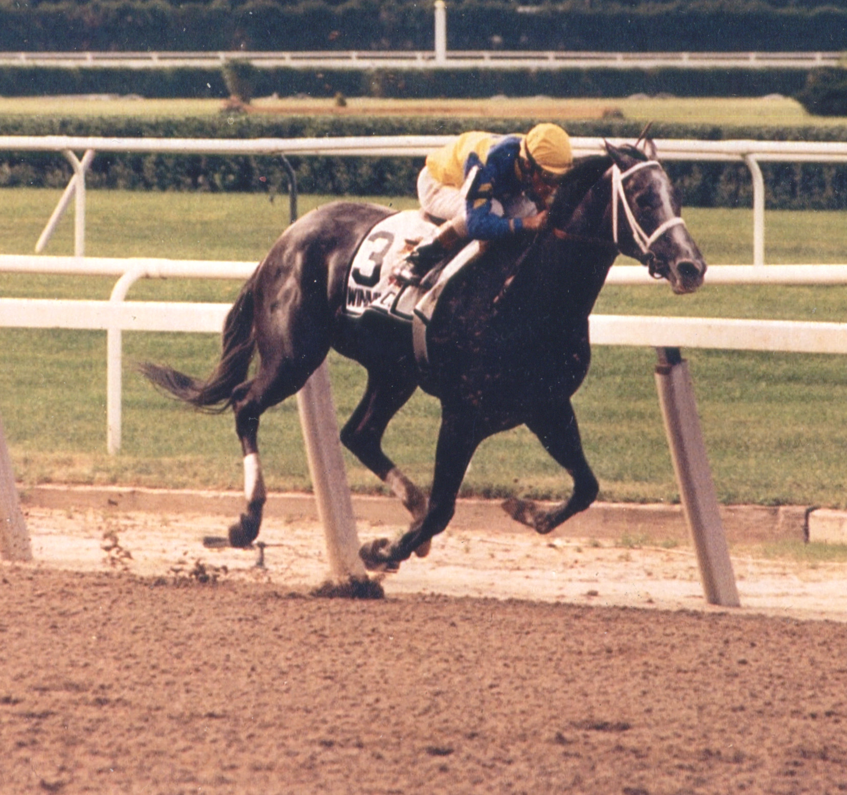 Winning Colors (Pat Day up) winning an allowance race at Saratoga, August 1989 (Mike Pender/Museum Collection)