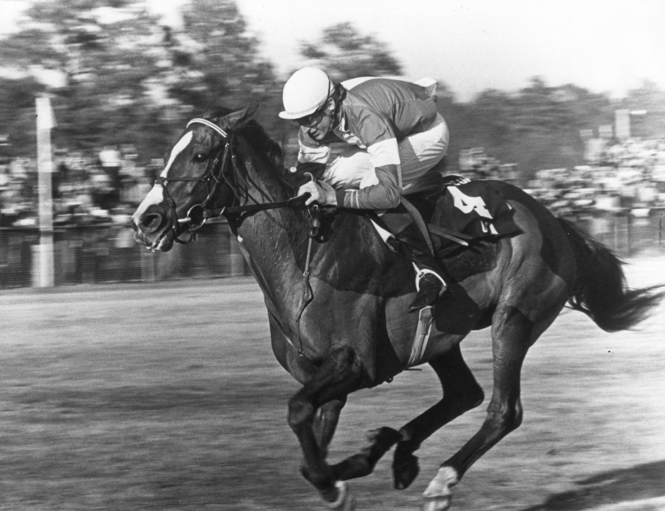 Zaccio (Greg Morris up) winning the 1981 Colonial Cup at Camden, S.C. (Milt Tobey/The BloodHorse /Museum Collection)