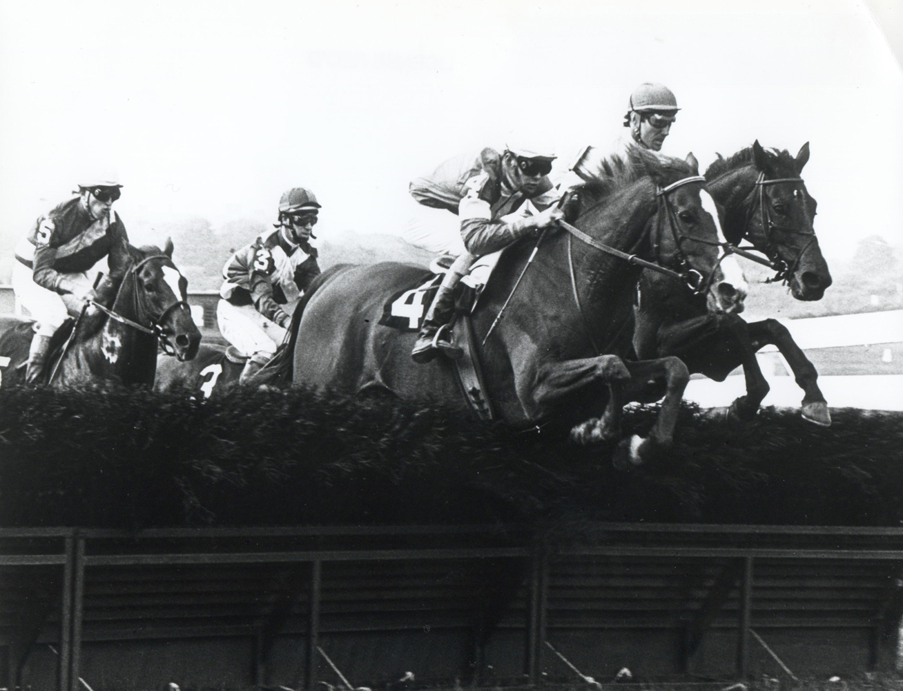 Zaccio clearing a jump in 1982 (Milt Tobey/The BloodHorse /Museum Collection)