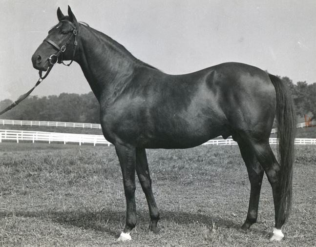 Alsab at stud, December 1947 (Museum Collection)