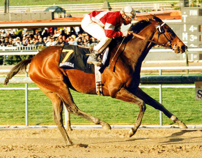 Bayakoa (Laffit Pincay, Jr. up) winning the 1989 Santa Margarita Handicap at Santa Anita Park (Santa Anita Photo/Museum Collection)