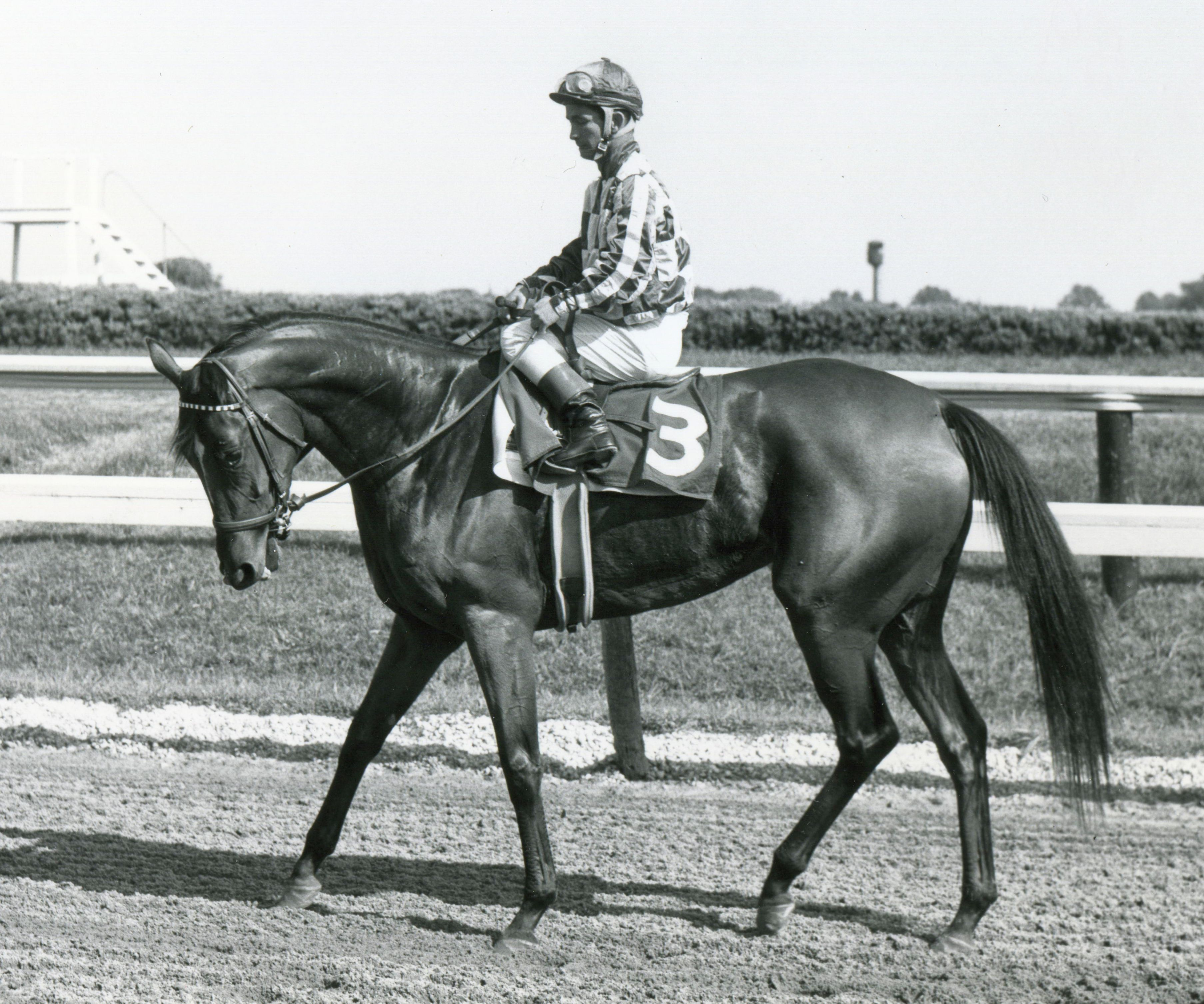 Cicada after finishing in the 1962 Delaware Handicap at Delaware Park