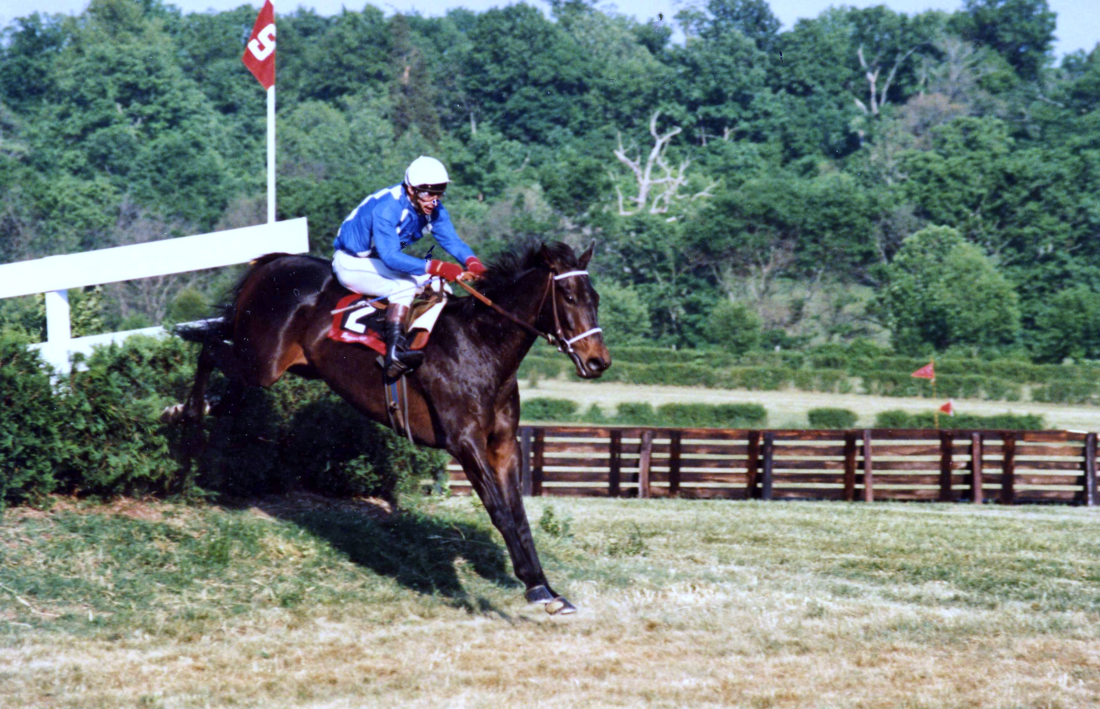 Flatterer clearing a jump (Catherine French/Museum Collection)