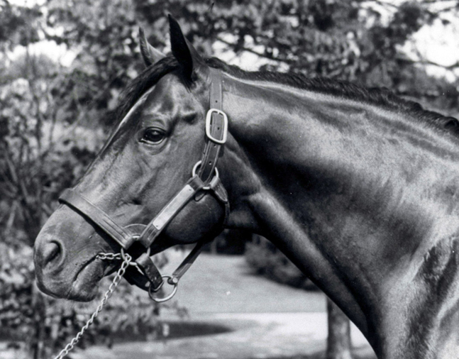 Hill Prince (The BloodHorse/Museum Collection)