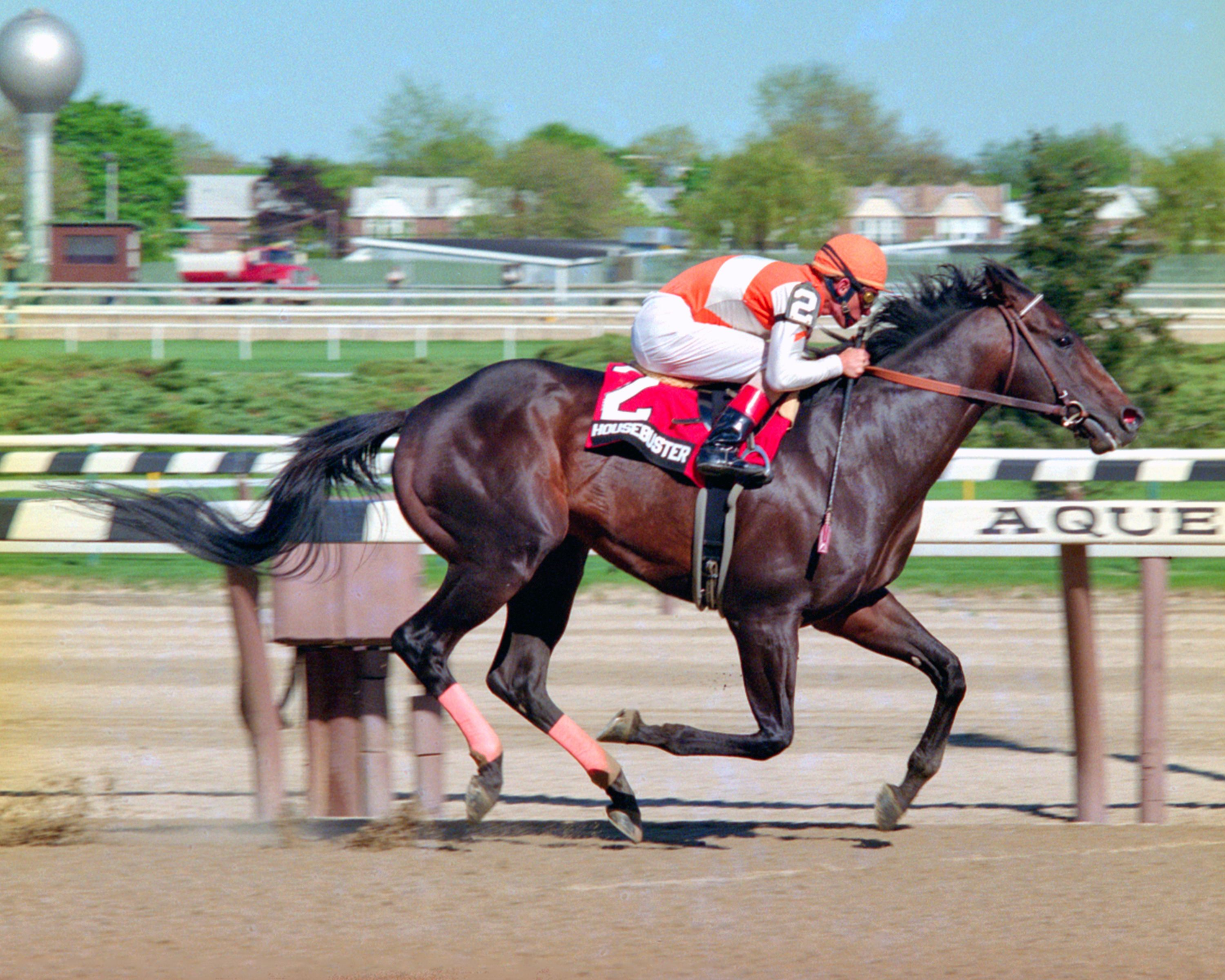 Housebuster, Craig Perret up (NYRA)