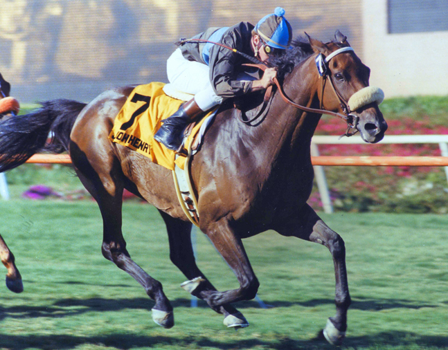 John Henry (Chris McCarron up) winning the 1984 Sunset Handicap at Hollywood Park (Hollywood Park Photo/Museum Collection)