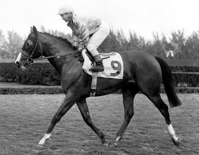 Northern Dancer (Bill Shoemaker up) after winning the 1964 Flamingo Stakes at Hialeah Park (Jim Raftery Turfotos/Museum Collection)