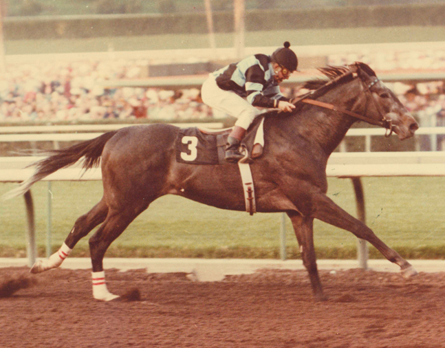 Spectacular Bid (Bill Shoemaker up) sets a new world record while winning the 1980 Charles H. Strub Stakes at Santa Anita (Bill Mochon/Museum Collection)
