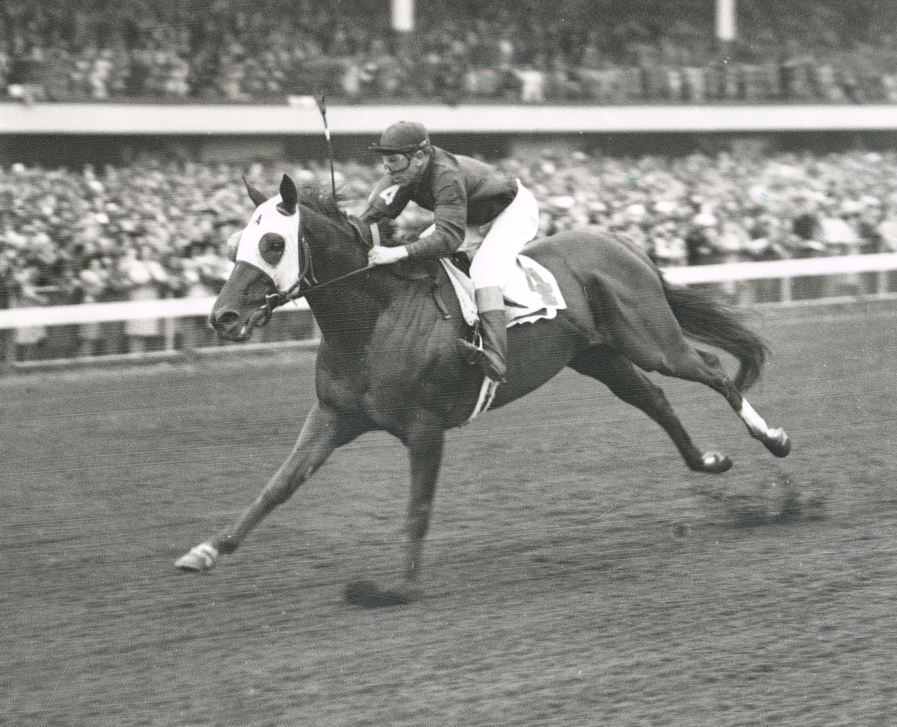 Whirlaway (Museum Collection)