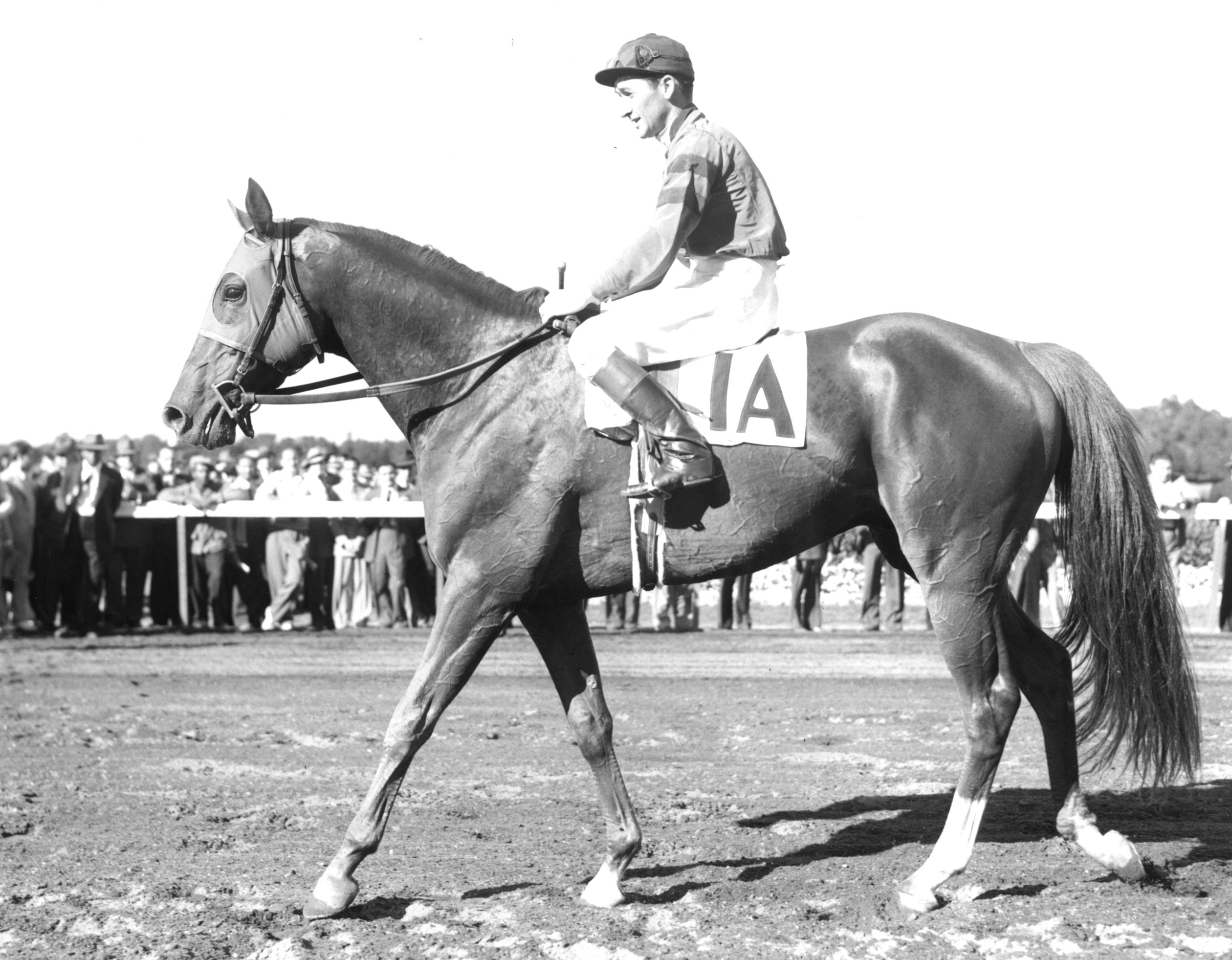Whirlaway with jockey Alfred Robertson up in 1941 (Museum Collection)