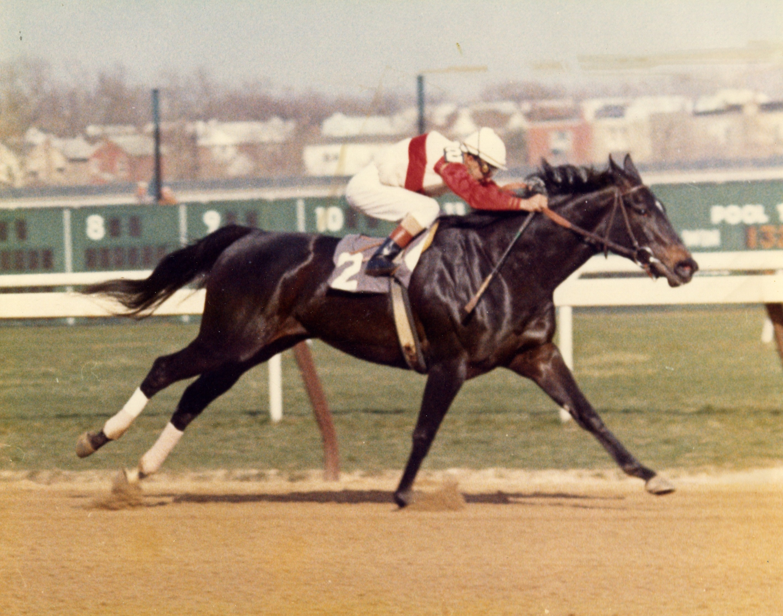 Ruffian (Jacinto Vasquez up) winning an allowance race at Aqueduct on April 14, 1975 (Museum Collection)