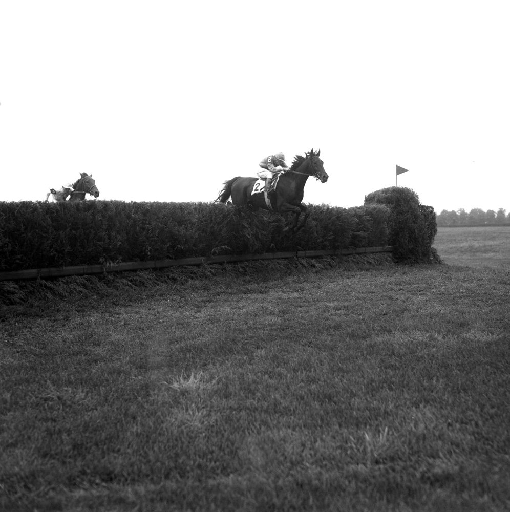 Frank Dooley Adams and Oedipus clearing a jump in the 1950 Brook Steeplechase Handicap at Belmont Park (Keeneland Library Morgan Collection/Museum Collection)