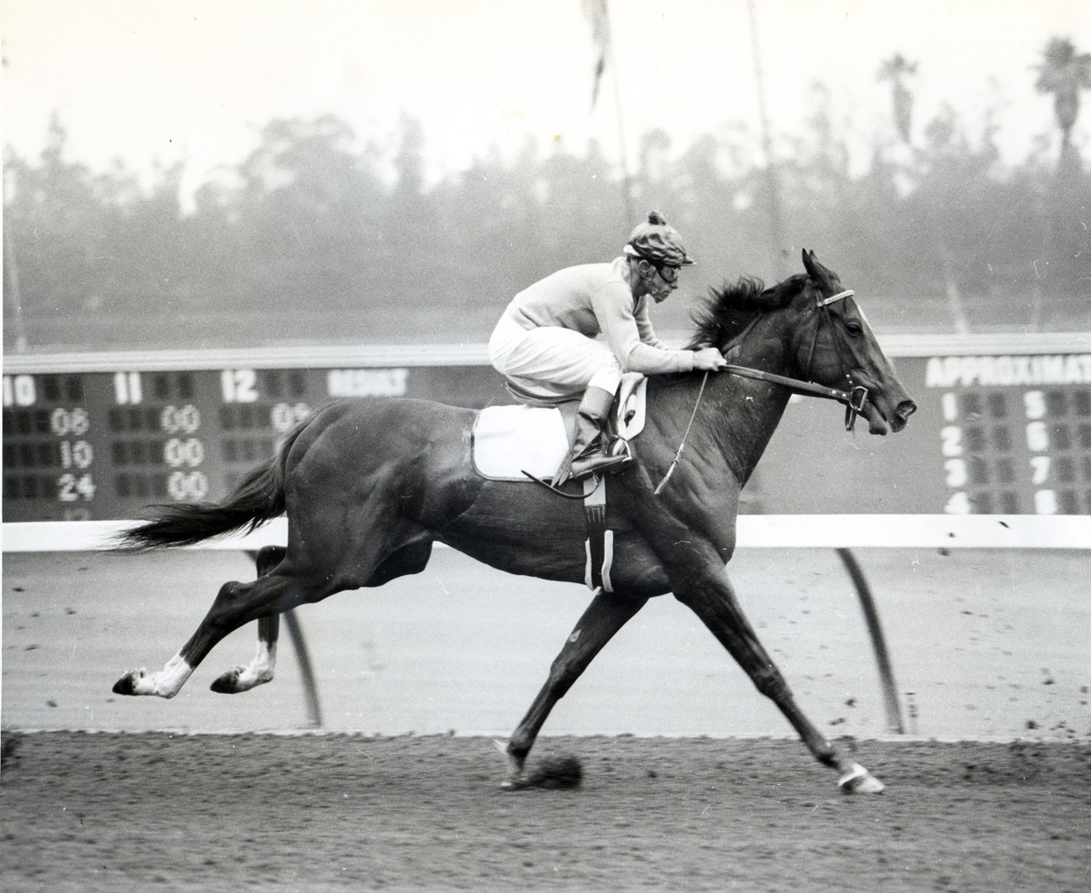 Bill Boland and Silver Spoon during morning workouts at Hollywood Park (Museum Collection)