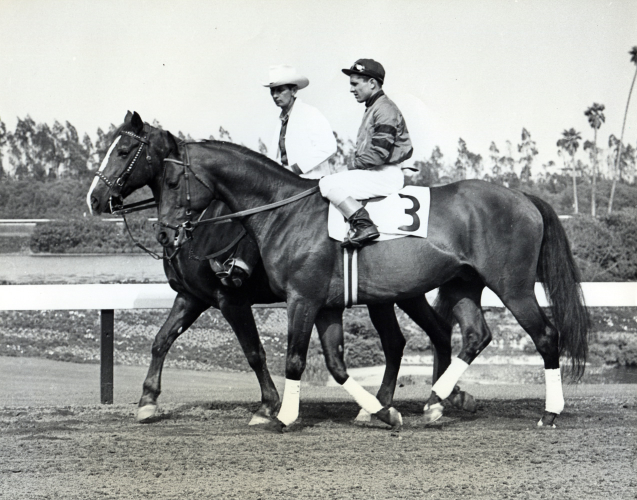 Steve Brooks and Citation at Hollywood Park (Museum Collection)