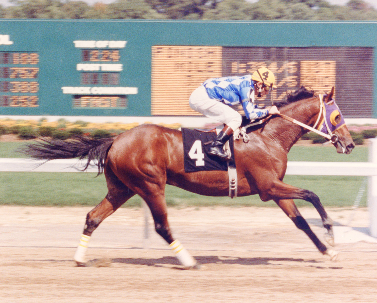 Don Brumfield and Alysheba winning a Maiden Special Weight event at Turfway Park in September 1986 (Lang Photos/Museum Collection)