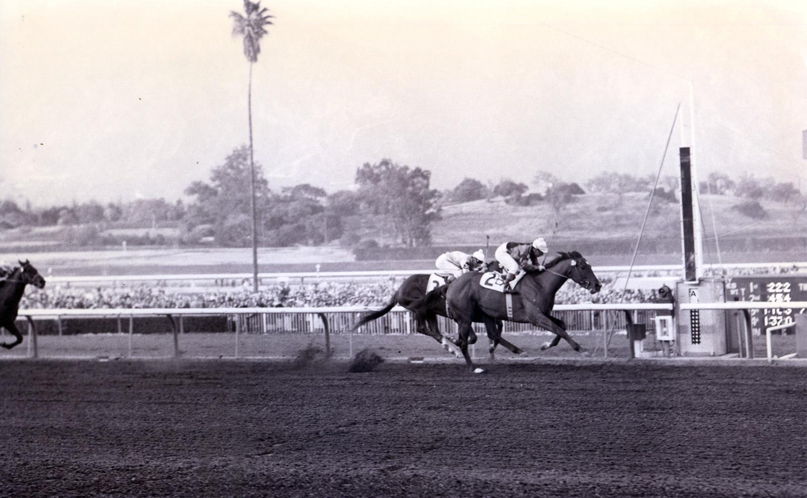 Johnny Longden and Swaps winning the 1955 Santa Anita Derby (Santa Anita Photo/Museum Collection)