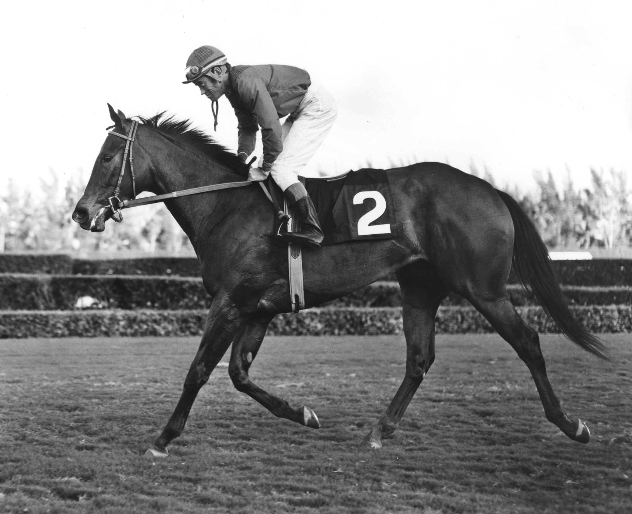 John Rotz and Ta Wee in the 1969 Jasmine Stakes at Hialeah Park (Jim Raftery Turfotos/Museum Collection)