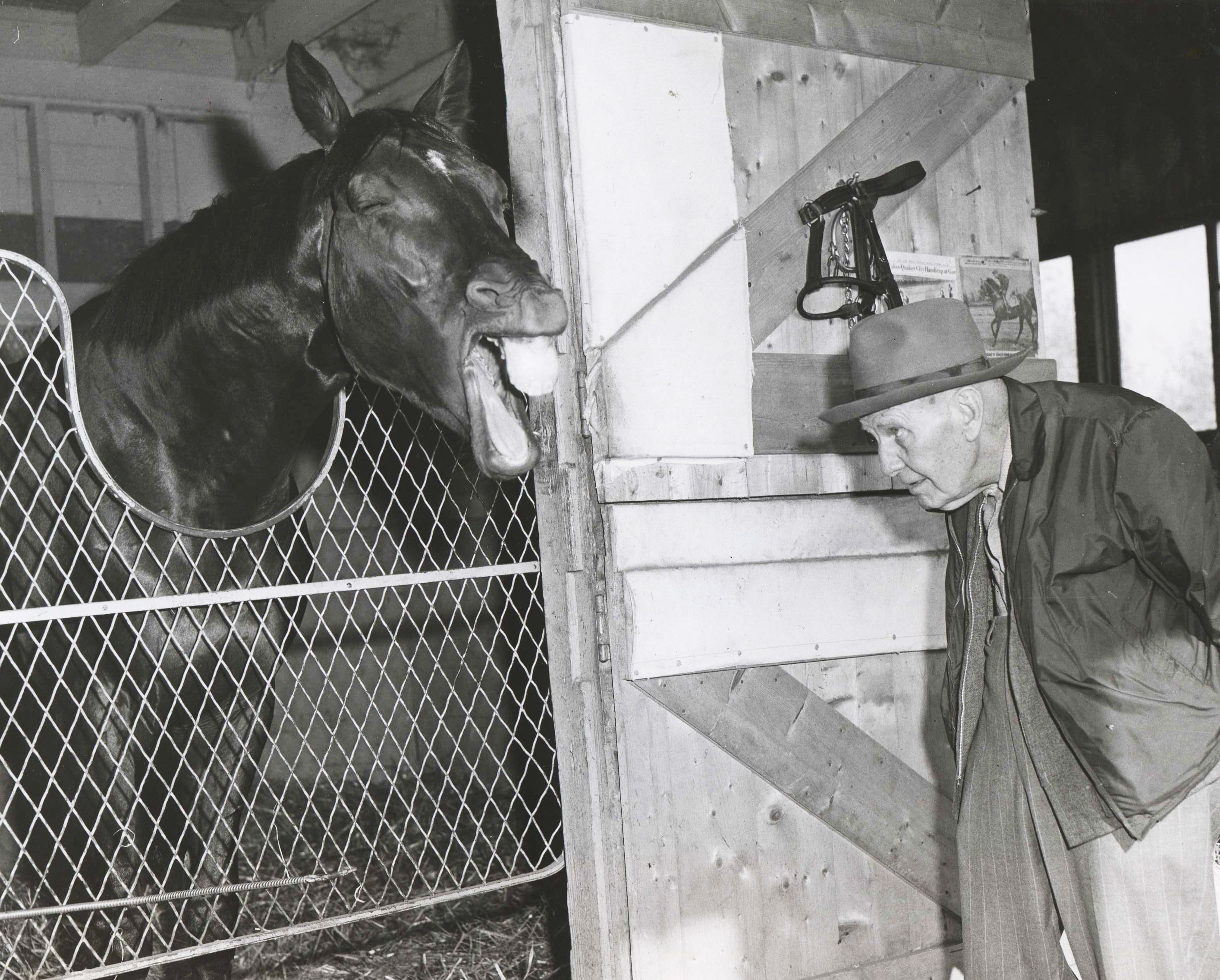 "Nashua and James ""Sunny Jim"" Fitzsimmons having a talk in the barn area at Aqueduct, October 1956 (Bert and Richard Morgan/Museum Collection)"